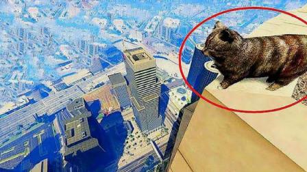 猫跳下高楼摔不死,难道真有九条命?镜头慢放20倍找到答案