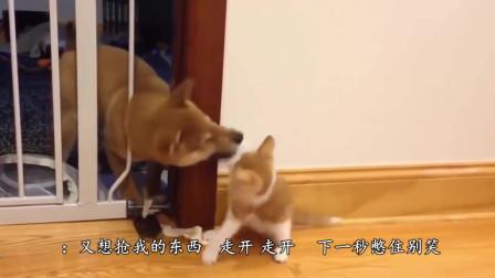 猫咪想抢狗狗的卷纸, 狗狗不给,猫咪对着狗狗就是一顿捶