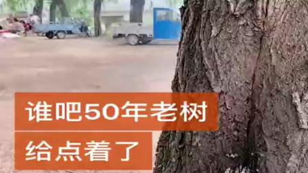 谁把60年的老树点着了,这些树历经几十年的风雨保存下来不容易,太缺德了