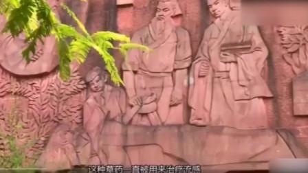 钟南山:板蓝根是中医的成果,大家不能忽视了它的存在