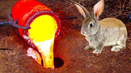 把1200℃岩浆倒入兔子洞,会发生什么呢?竟然有意外惊喜!