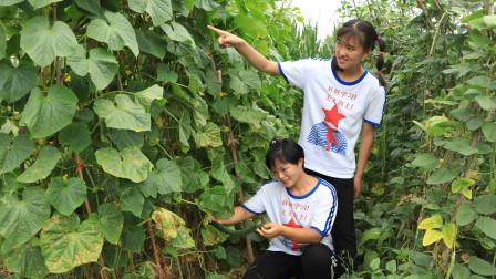 欢欢的快乐童年趣事:欢欢寻亲记2:姐妹俩一起去找妈妈,半路欢欢给妹妹摘黄瓜解渴!