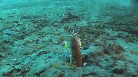 终于知道,它为什么叫皮皮虾了