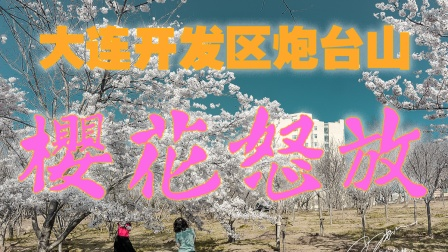 大连开发区炮台山公园的樱花悄然怒放啦,赏花要抓紧