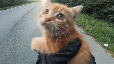 高速公路上的流浪猫缩成一团,那个男人自带光环出现了