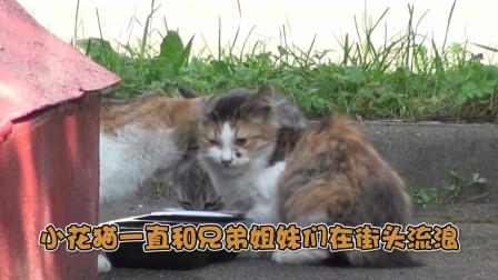 断腿小花猫遇上俄罗斯壮汉,战斗民族的男人也可以这么友爱