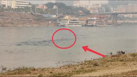 实拍涨水后的澜沧江汹涌湍急,但河中竟还有人顺江游泳,真是胆大