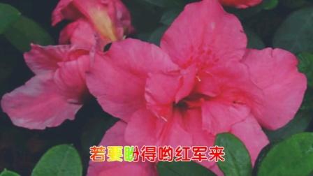 【原创】巴渝毛彩视/《火红朝霞映山红》