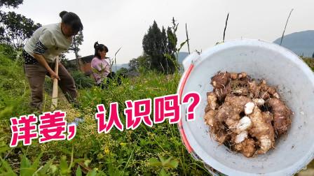 无臂女孩回农村,帮妈妈干农活,地里挖出的这个宝贝你们认识吗?