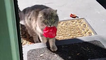 那些猫咪深爱主人的明证,每一个都爱得死去活来