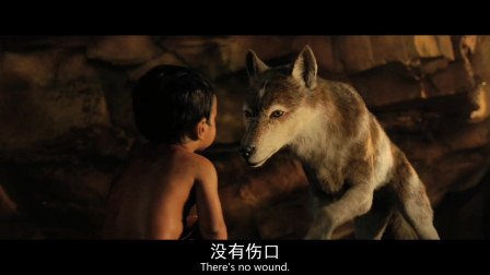 人类婴儿误入狼群.其实动物都是有感情的。暖心。