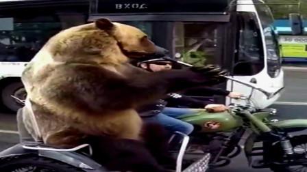 俄罗斯的熊都这么多才多艺的吗?