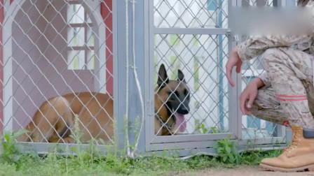 警犬不慎咬伤主人,事后愧疚不吃东西,动物也有感情