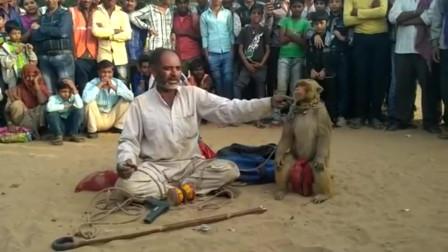 看看印度走红的猴杂戏
