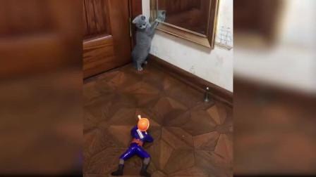 搞笑动物集锦(二)猫对玩具的反应