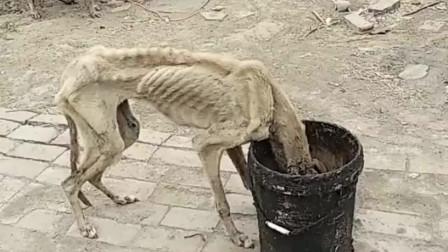 第一次见这么瘦的狗