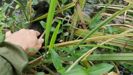 小伙河边游玩发现几只被遗弃的小野兽,爱心泛滥带回去养,能养活吗