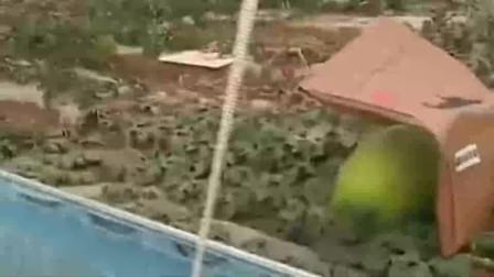 大棚里的西瓜个头真大,上面盖着东西是用来防晒的吗,还能有这操作?