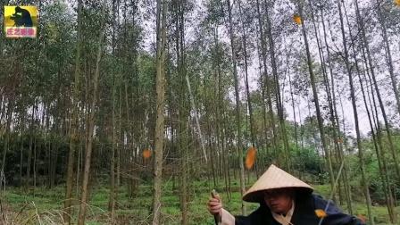 笑傲江湖之独闯森林