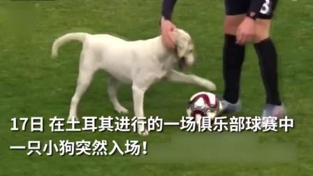 足球狗!小狗闯入赛场上演带球过人
