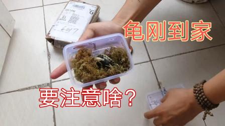 新买的龟到家了应该如何处理?做好这几点,提升龟龟存活率