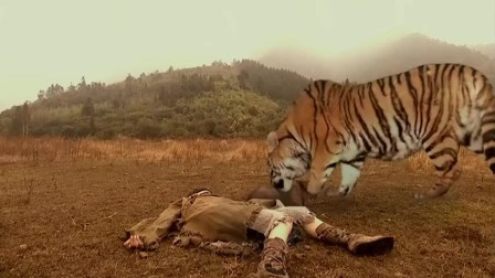 母亲去世,小孩竟从小被老虎抚养长大,怎料长大后连老虎都怕他