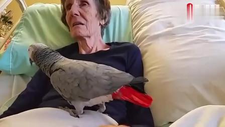 主人病重向一起生活了25年的鹦鹉告别,鹦鹉的回应让世界都哭了