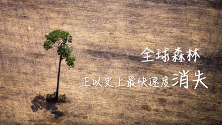 全球森林正以最快速度消失!看完这个环保故事,整个人都被触动了