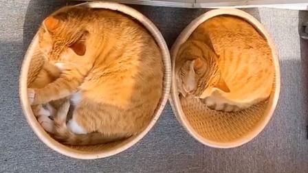 听说猫咪睡觉会缩成一团,看看这些猫,多圆