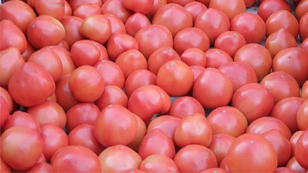 买西红柿时,只要记住2点,催熟西红柿一看便知,以后不会买错了