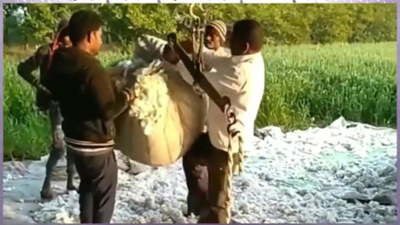 看了印度称棉花方式,我才相信棉花真的比砝码重