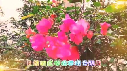 【原创】巴渝毛彩视/《阳春三月花浪漫》