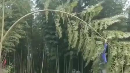 安徽合肥市小哥:高超的技术说这家伙上辈子是猴子,一点不过分