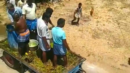 疫情在印度蔓延,封城的印度这样消毒,这难道是在过泼水节吗