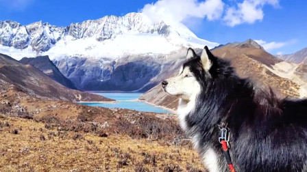 领略美景的西藏旅行,狗狗与人的默契之行