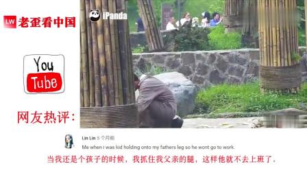 老外看中国:老外看动物园的大熊猫说:像极了我爸不给我钱买手机我抱他的样子