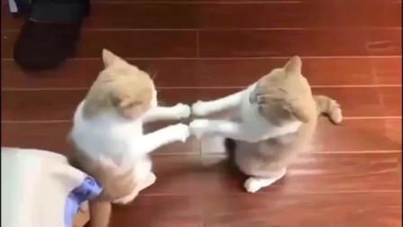玩嗨了的两橘猫,喊吃饭都不搭理,就在这玩游戏