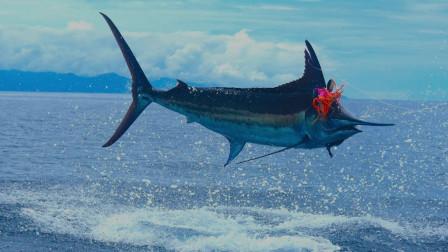 深海拖钓马林鱼的唯美瞬间!