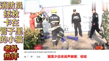 老外看中国:中国消防员救了一只喵星人,这只猫火到国外,老外评论重点全是猫!