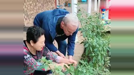 老外在中国:丈母娘先见之明,居家隔离自给自足,领上洋女婿干活太欢乐