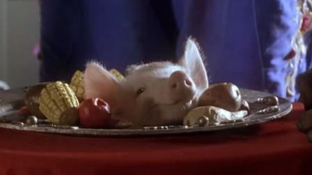 小猪为替主人还债,跑进城市卖身赚钱,谁知最后竟成了大明星!