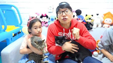 小萝莉和哥哥一起养小猫咪!他们能照顾好嘛?