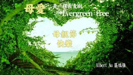區瑞強 - Evergreen Tree 【母親節快樂】