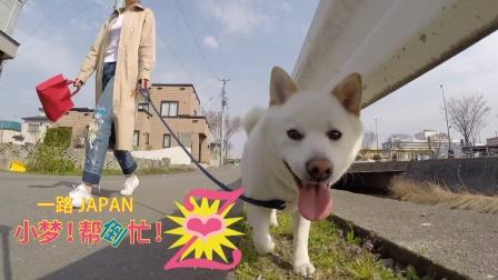 北国青森的春天~和白犬小福散步记录~ 曾经的5月~