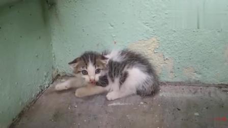 小猫咪凶我,在洞里发现一只流浪猫,脾气不太好