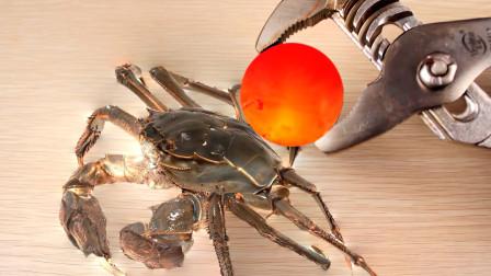 1000°铁球能烧熟螃蟹吗?相遇瞬间才是震撼的开始!