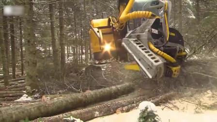 老外干活为什么这么省力?看完他们锯树的过程,我羡慕了!