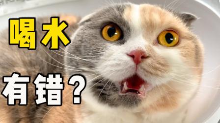 猫咪喝水太多被拉去医院检查,气的全程口吐芬芳:喝点水怎么了?
