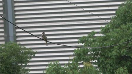 ax700. 用索尼ax700拍的小鸟,这个画质非常不错了