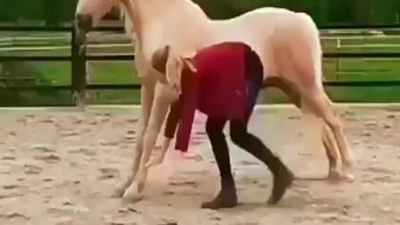 人马合一天下无敌,有灵魂的马,身材比小姐姐还棒!